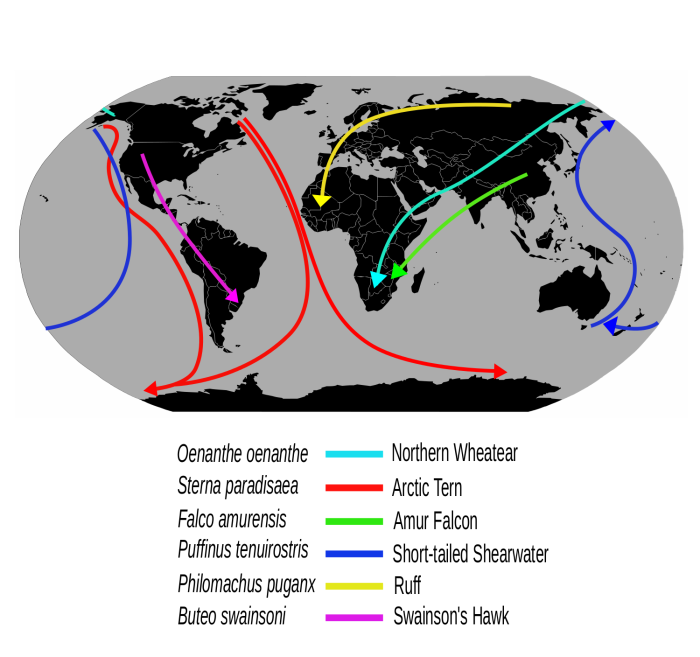 Migrationroutes.svg.png